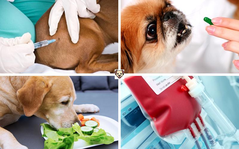 Как лечится печеночная энцефалопатия у собак?