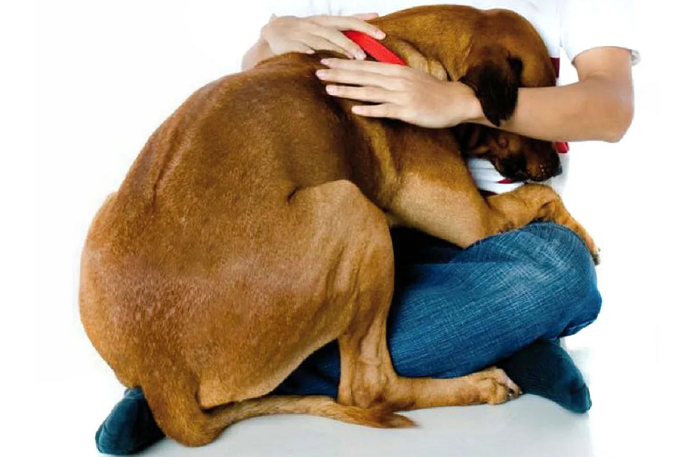 Почему взрослая собака боится гулять на улице?