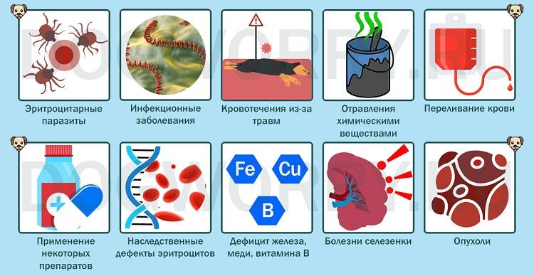 Причины развития анемии у животных