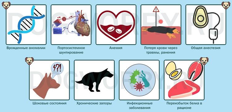 Причины развития патологии у животных