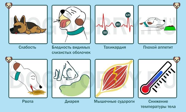 Симптомы анемии у собак