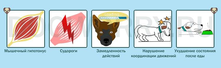 Симптомы энцефалопатии у собак
