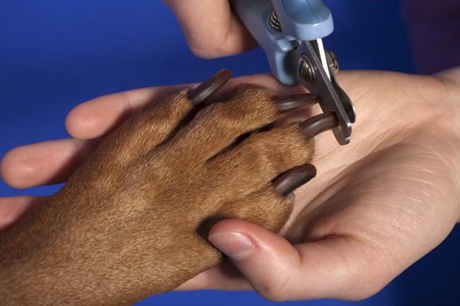 Зачем нужно стричь когти собаке?