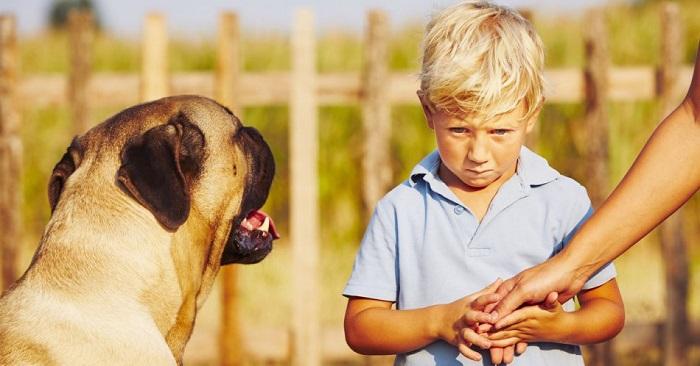 Что делать, если ребенок боится собак?