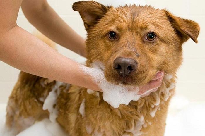 Что делать, если собака сильно линяет?
