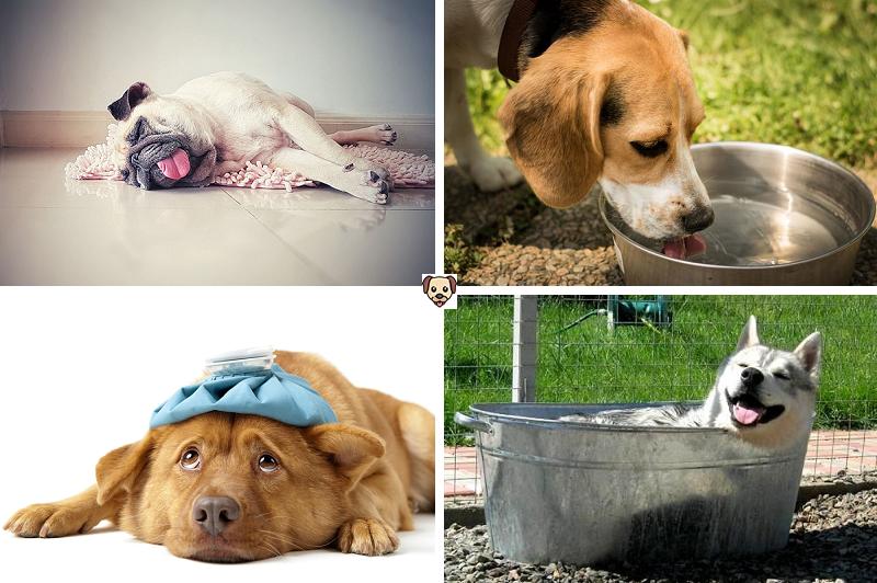 Как охладить собаку в жаркое время года?