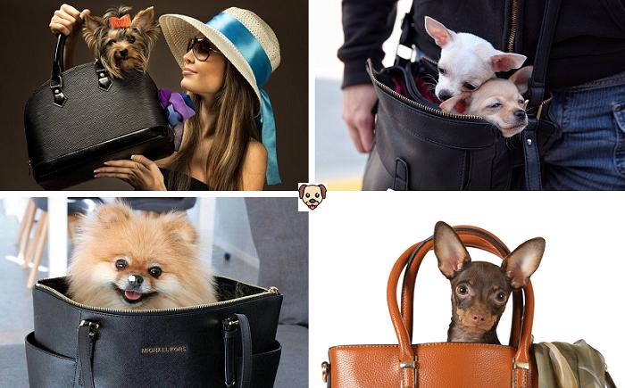 Как правильно выбрать кличку для собаки миниатюрной породы?
