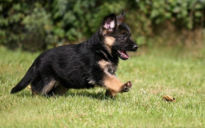 Каким должно быть поведение здорового щенка?