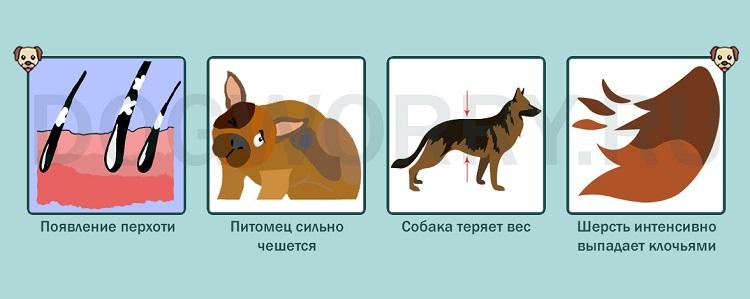 Нужно ли обращаться к ветеринару, если собака линяет?