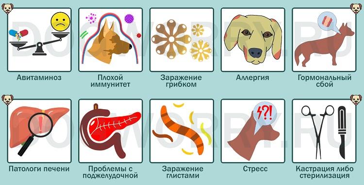 Причины, по которым собака сильно линяет
