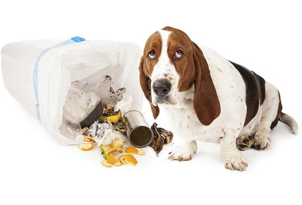 Приучение собаки к порядку в доме