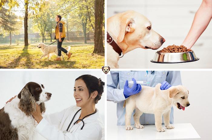 Профилактика болезни у собак