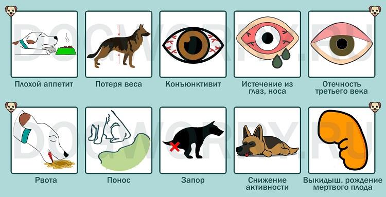 Симптомы микоплазмоза у собак
