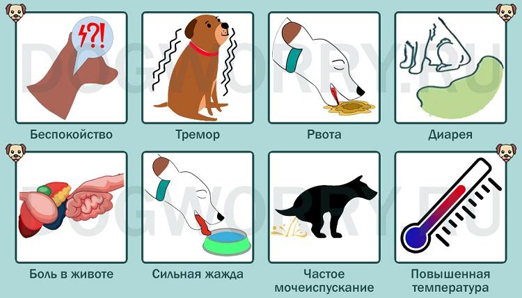 Симптомы отравления шоколадом у собак
