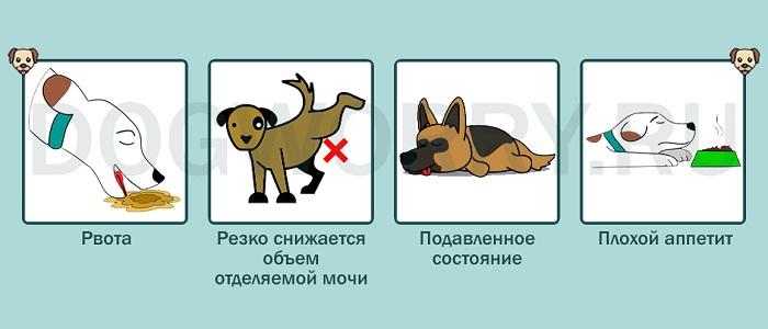 Симптомы отравления сухофруктами у собак