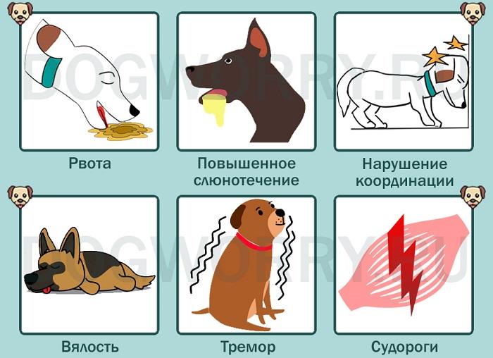 Симптомы отравления выпечкой у собак