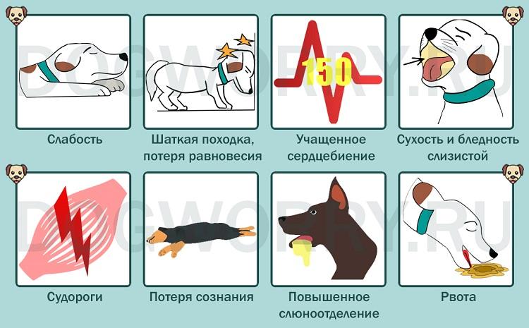Симптомы теплового удара у собак
