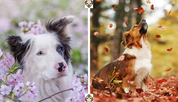 В какой период наступает линька у собак?