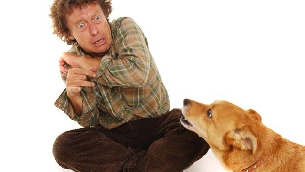 Виды страха собак у людей