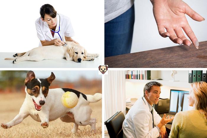 Что делать, если ваша собака храпит?