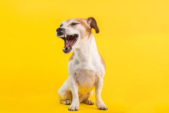Что такое чиханье у собак?