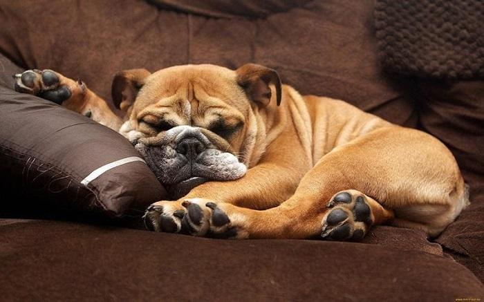 Что такое храп у собак?