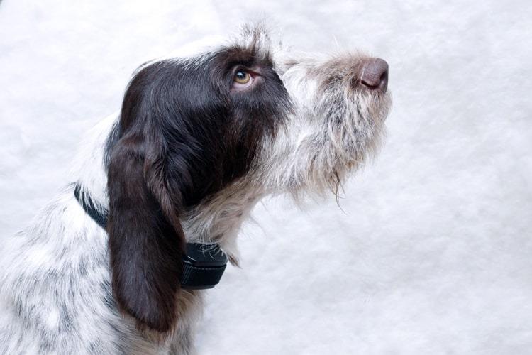 Что такое ошейник антилай для собак?