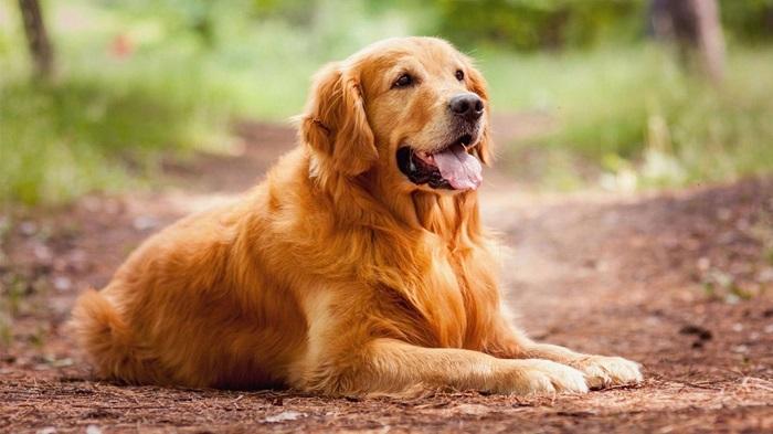 Имена для собак-девочек компаньонов
