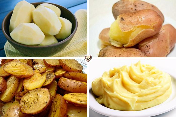 Как правильно давать собаке картошку в пищу?