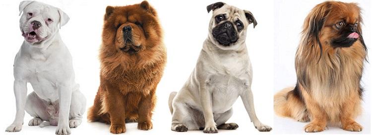 Какие породы собак склонны к храпу?