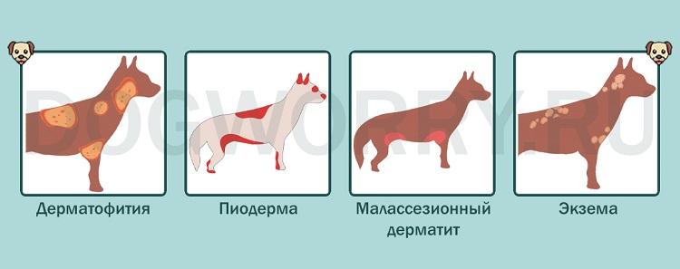 Кожные заболевания у собак