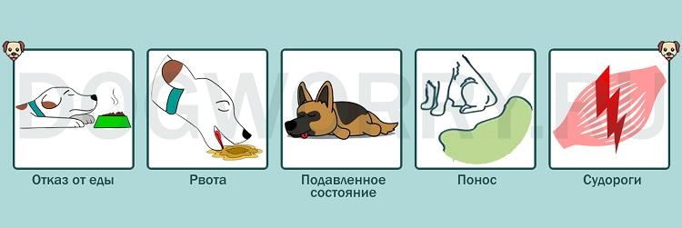 Отравление как причина того, что собака дрожит
