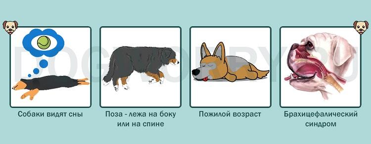 Почему собака храпит во сне?