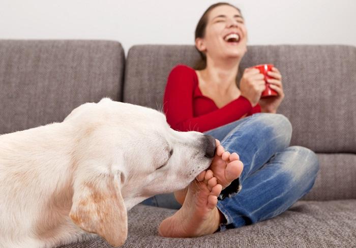 Почему собака лижет ноги хозяину?