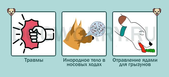 Причины носового кровотечения у собак