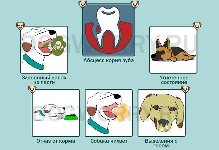 Признаки абсцесса корня зуба у собаки