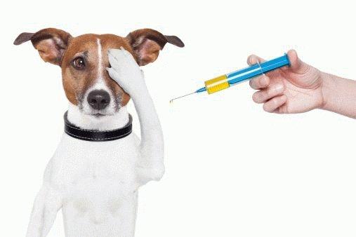 Психологические факторы дрожи у собак