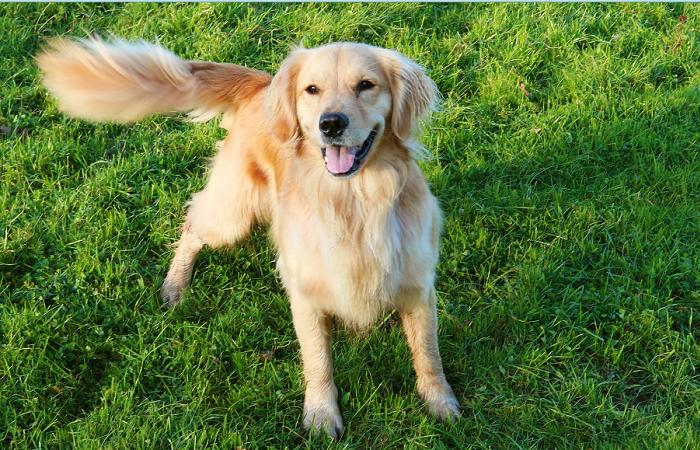 Расшифровка движения хвоста у собаки