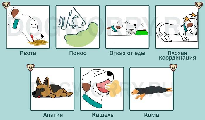 Симптомы отравления картофелем у собак