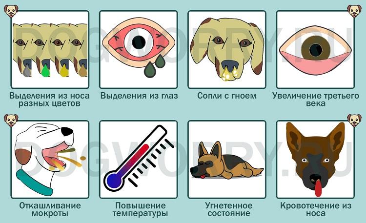 Симптомы заражения инфекцией у собак