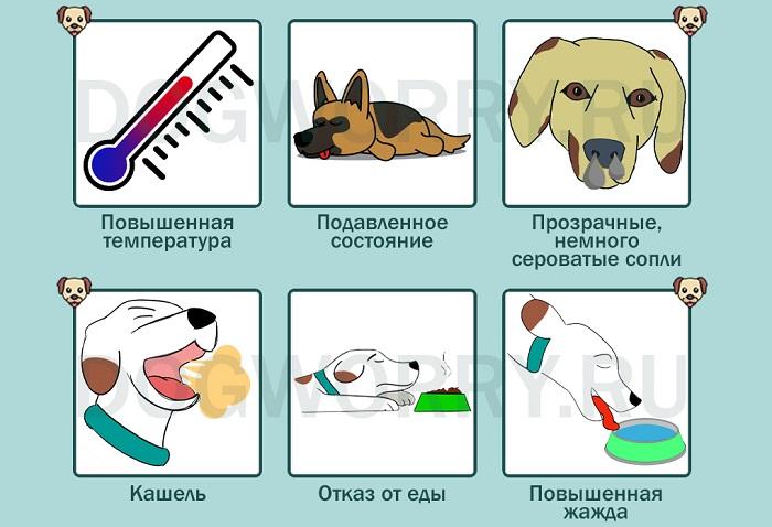 Собака чихает из-за простуды