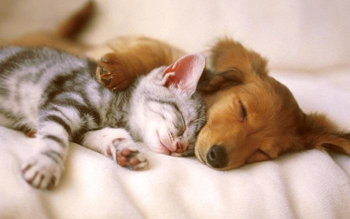 Возможно ли мирное сосуществование между собакой и котом?