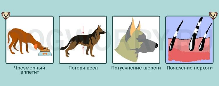 Заражение паразитами как причина того, что собака дрожит