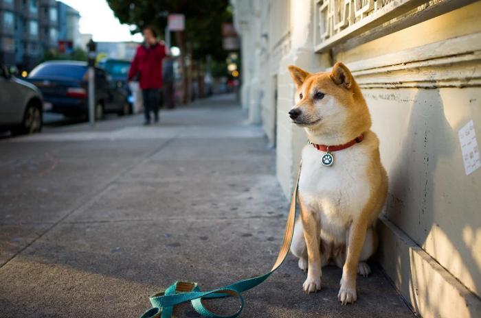 Как найти собаку, если она убежала?