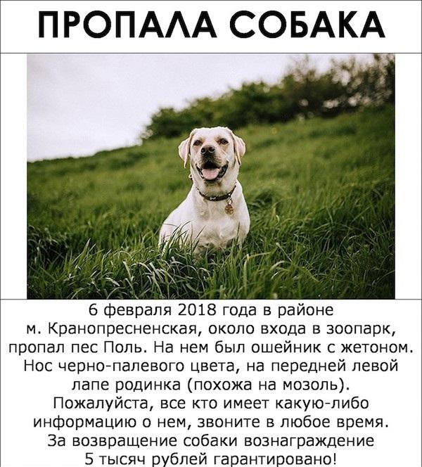 Как найти собаку с помощью правильно составленного объявления? Пример