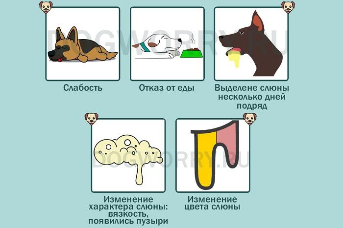 Когда нужно обращаться к ветеринару?
