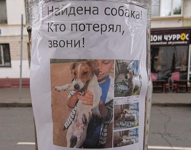 Обращать внимание на объявление о найденных собаках