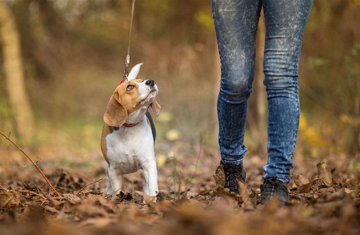 Сколько должна длиться прогулка с питомцем?