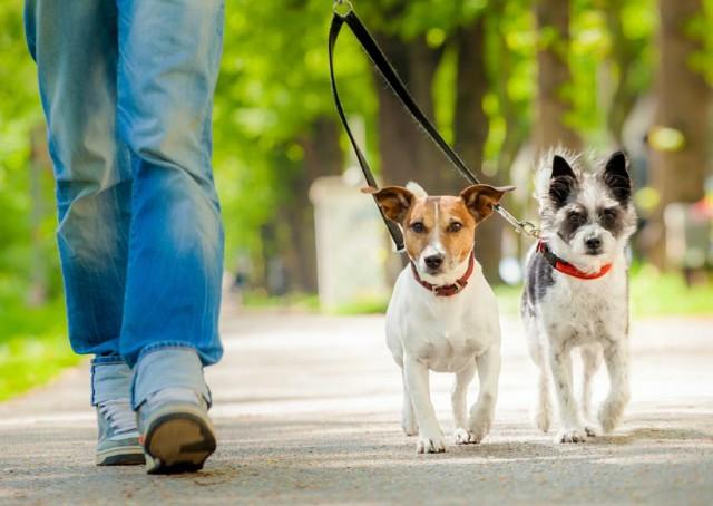 Сколько раз в день нужно выгуливать свою собаку?