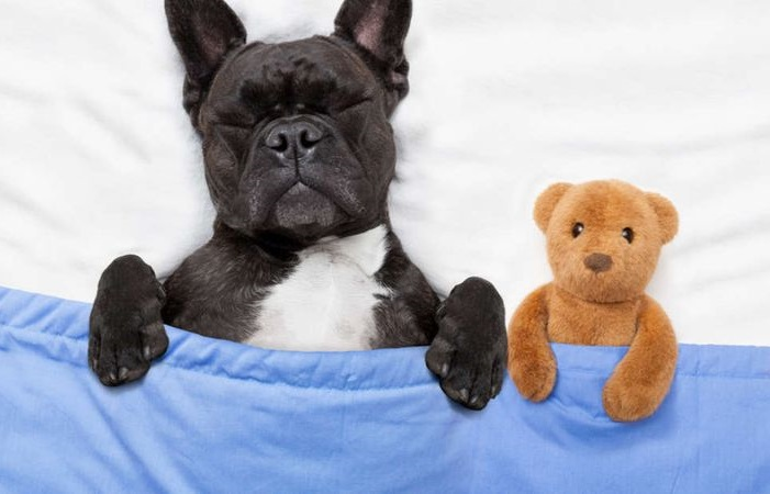 Снятся ли собакам сны?